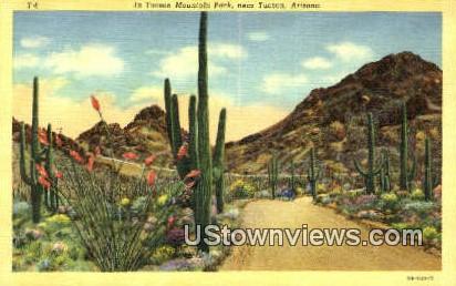 Tucson Mountain Park - Arizona AZ Postcard