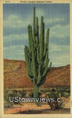 Largest Sahuaro Cactus - Misc, Arizona AZ Postcard