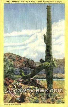 Waking Cactus - Wickenburg, Arizona AZ Postcard