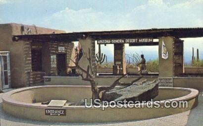 Lizard Pit - Tucson, Arizona AZ Postcard