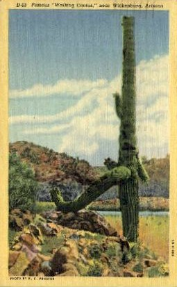 Walking Cactus - Wickenburg, Arizona AZ Postcard