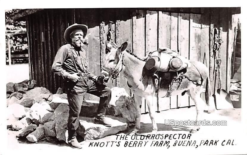 The Old Prospector - Buena Park, California CA Postcard