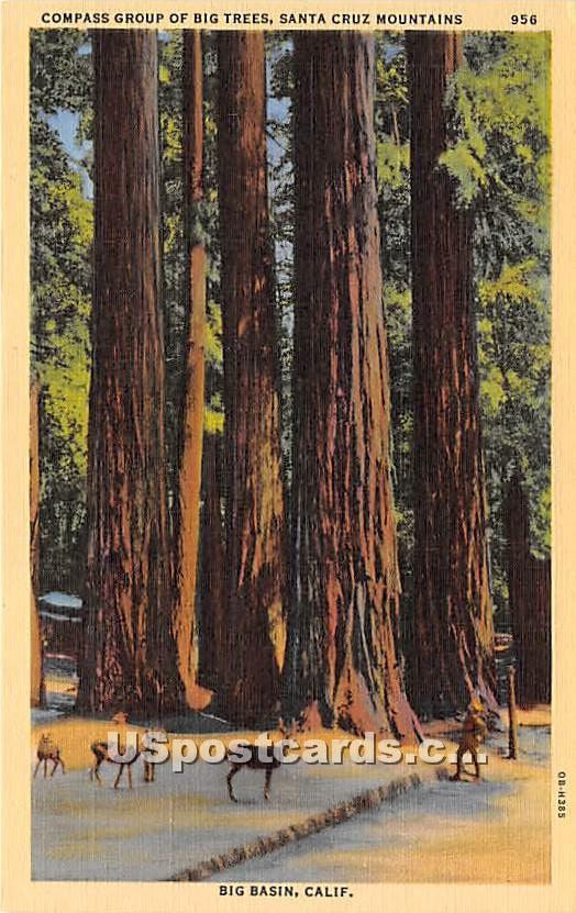 Compass Group of Big Trees - Big Basin, California CA Postcard
