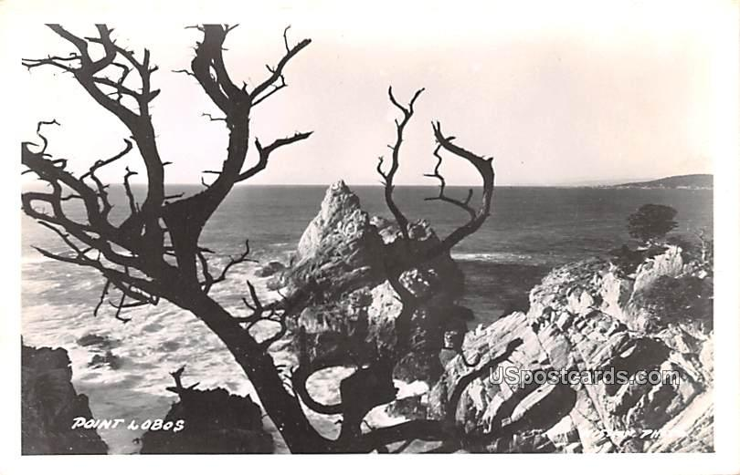 Point Lobos - Carmel by the Sea, California CA Postcard