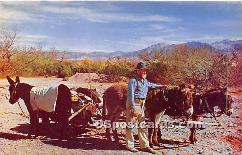 Death Valley Prospector - California CA Postcard