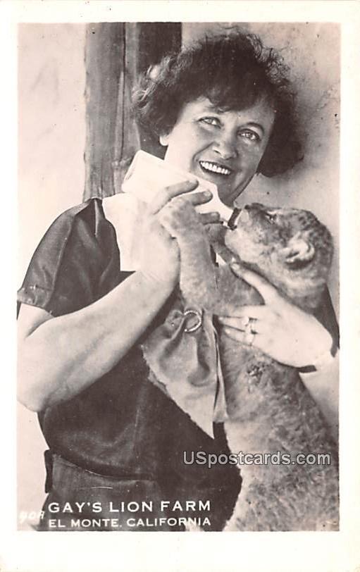 Gay's Lion Farm - El Monte, California CA Postcard