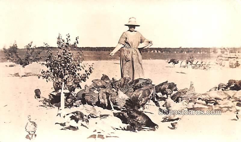Chickens - Fresno, California CA Postcard