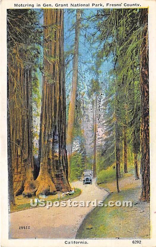 Motoring in Gen Grant National Park - Fresno, California CA Postcard
