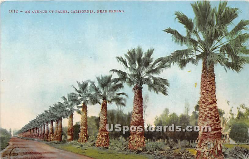 Avenue of Palms - Fresno, California CA Postcard