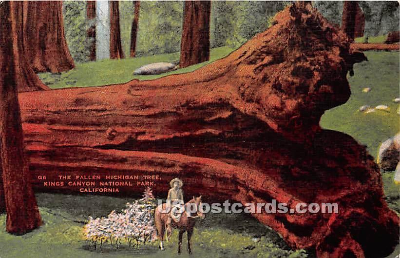Fallen Michigan Tree - Kings Canyon National Park, California CA Postcard