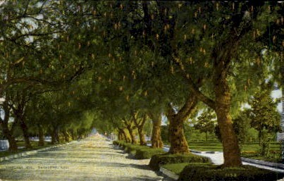 Marengo Avenue - Los Angeles, California CA Postcard