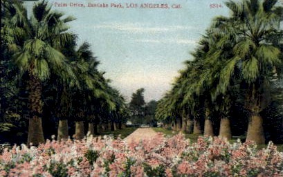Palm Drive - Los Angeles, California CA Postcard