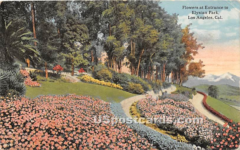 Flowers, Elysian Park - Los Angeles, California CA Postcard