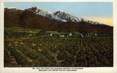Mt. San Antonio and Orange Groves - Mt. Wilson, California CA Postcard