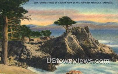 Cypress Tree - Monterey Peninsula, California CA Postcard