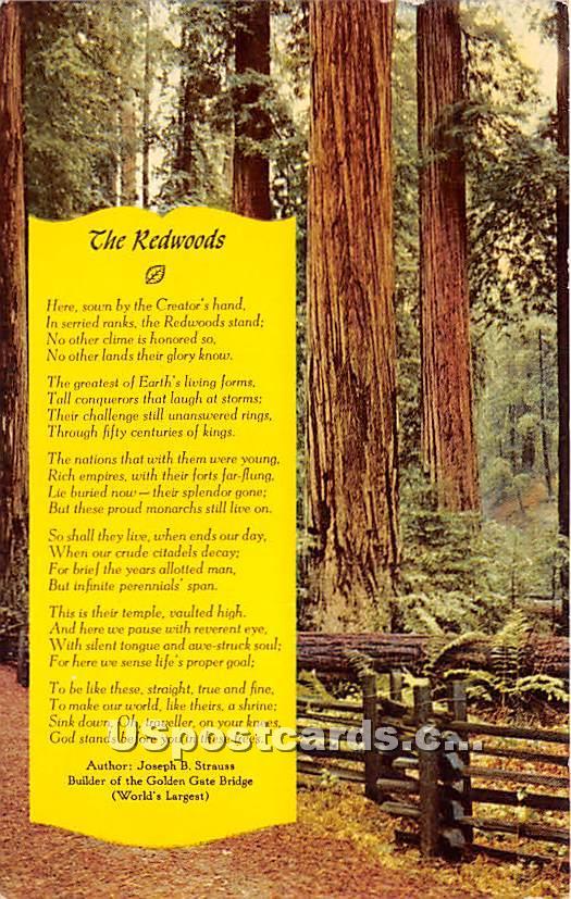Redwoods, Sequoia Sempervirens - Monterey, California CA Postcard