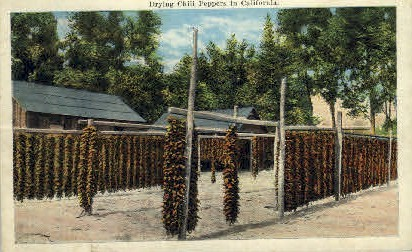 Drying Chili Peppers in California - MIsc Postcard