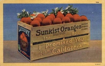 Sunkist Oranges - MIsc, California CA Postcard