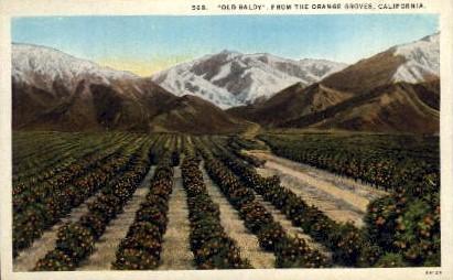 Old Baldy, Orange Groves - MIsc, California CA Postcard