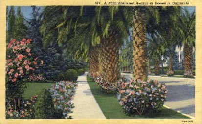 A Palm Sheltered Avenue - MIsc, California CA Postcard