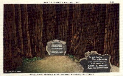 World's Largest Cathedral Tree - MIsc, California CA Postcard