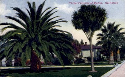 Three Varieties of Palms - MIsc, California CA Postcard