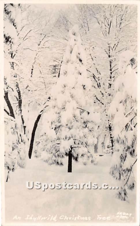 Idyllwild Christmas Tree, Real Photo - MIsc, California CA Postcard