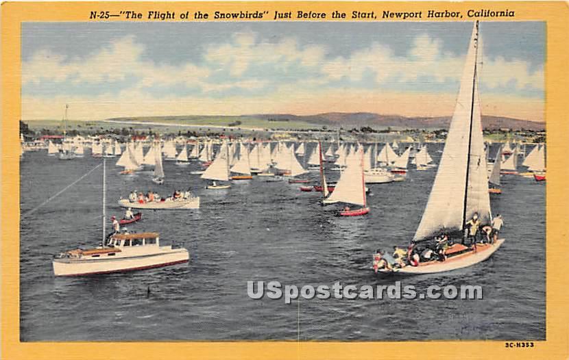 Flight of the Snowbirds - Newport Harbor, California CA Postcard