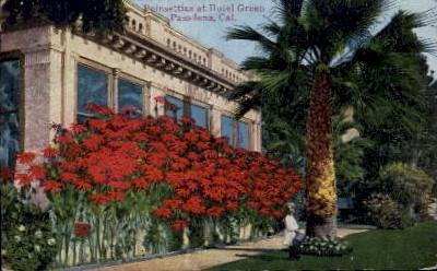 Poinsettias at Hotel Green - Pasadena, California CA Postcard