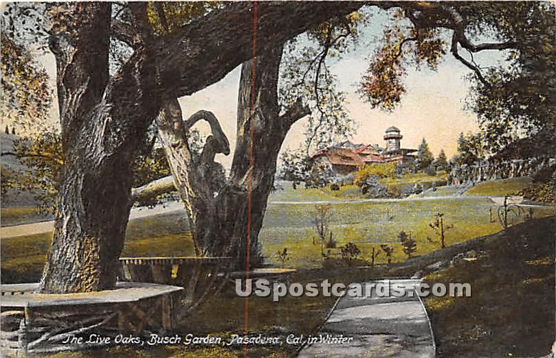 Live Oaks, Busch Garden - Pasadena, California CA Postcard
