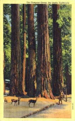 The Compass Group - Big Basin, California CA Postcard