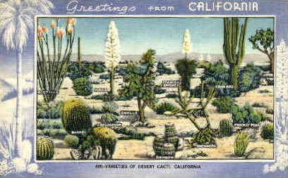 Varieties of Desert Cacti - MIsc, California CA Postcard