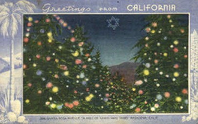 Christmas Trees - Pasadena, California CA Postcard