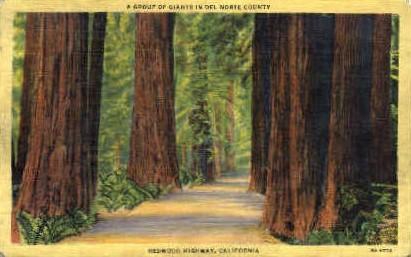 Redwood Highway - MIsc, California CA Postcard