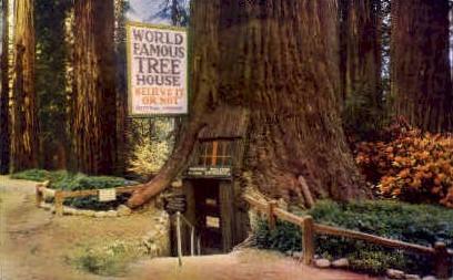 World Famous Tree House - MIsc, California CA Postcard