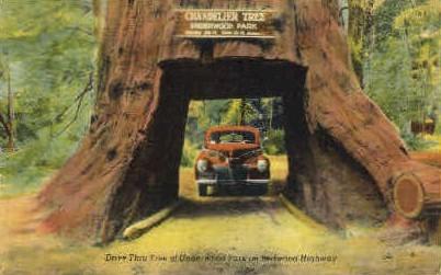 Drive Thru Tree - MIsc, California CA Postcard