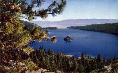 Pine Cones, Lake Tahoe - California CA Postcard