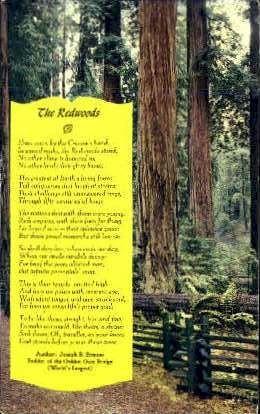 The Redwoods - MIsc, California CA Postcard
