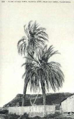 Palms at Old Town - San Diego, California CA Postcard