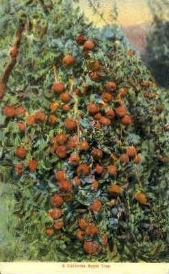 A California Apple Tree - MIsc Postcard