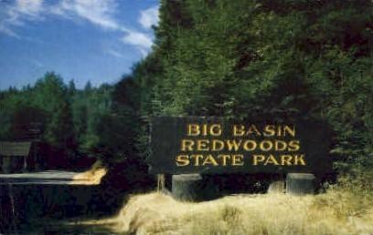 Big Basin Redwoods State Park - California CA Postcard
