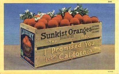 Oranges   - MIsc, California CA Postcard