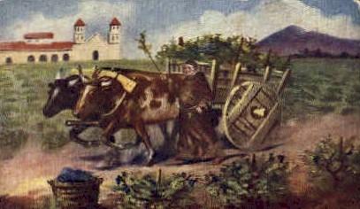 The Mission Vineyard - MIsc, California CA Postcard