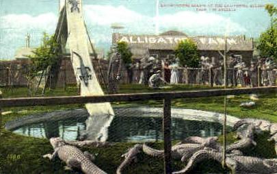 Califronia Alligator Farm - Los Angeles, California CA Postcard