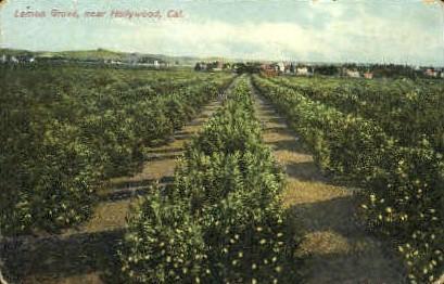Lemon Grove - Hollywood, California CA Postcard