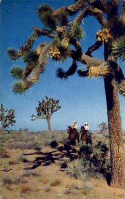 Joshua Tree Forest - MIsc, California CA Postcard