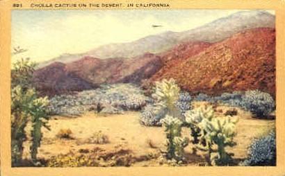Cholla Cactus on the Desert - MIsc, California CA Postcard