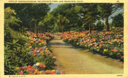 Path of Rhododendrons, Golden Gate Park - San Francisco, California CA Postcard