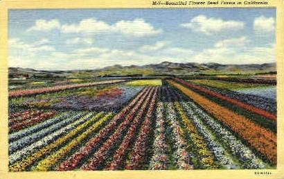 Flower Seed Farms  - MIsc, California CA Postcard