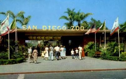 San Diego Zoo - California CA Postcard